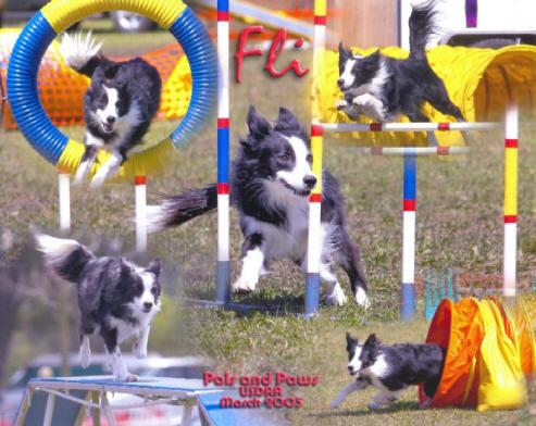 Agility Dog Training In Pensacola Florida