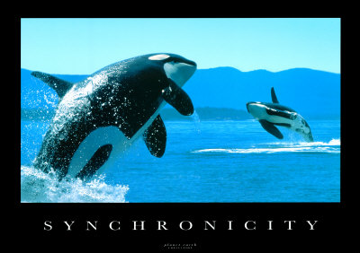 synchronicity-whales.jpg