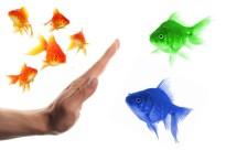 goldfish canstockphoto5844496 (2)