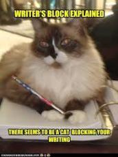 cat block