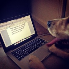 dog writers block