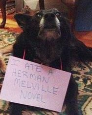 This dog is a serious literary eater.
