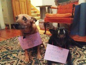 dog shame 1