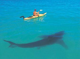 shark 0ba08b8420946f633e3dac05de3dfa24