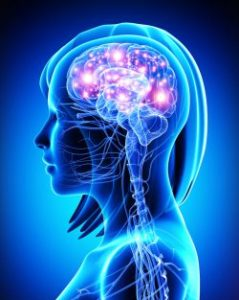 brain-default-mode-network-canstockphoto19535257-2